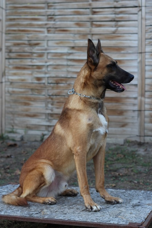 Argus- Personal Protection Dog